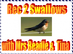 swallow-pic